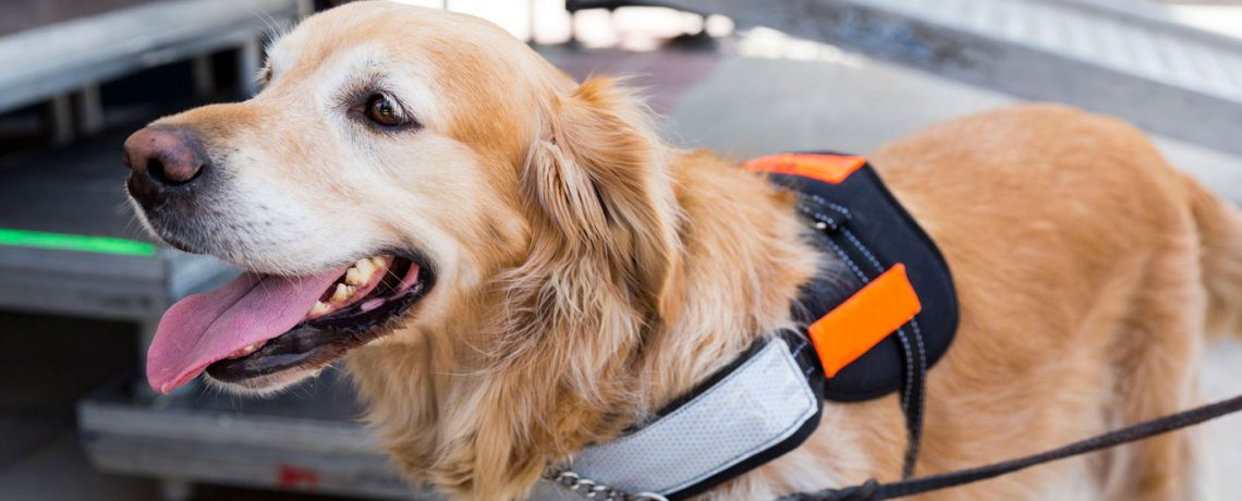 Americans with Disabilities Act | ADA and Service Dogs